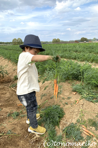 パリ郊外の農場で野菜やフルーツを収穫しよう!_c0024345_23085678.jpg