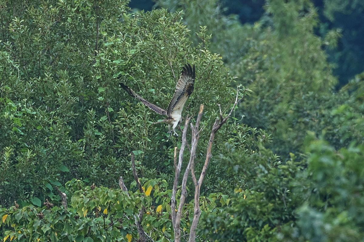 ミサゴの樹にて_d0125872_22172036.jpg