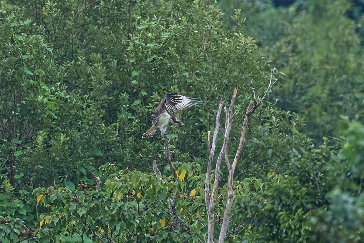ミサゴの樹にて_d0125872_22172133.jpg