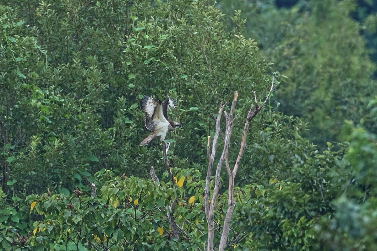 ミサゴの樹にて_d0125872_22172134.jpg