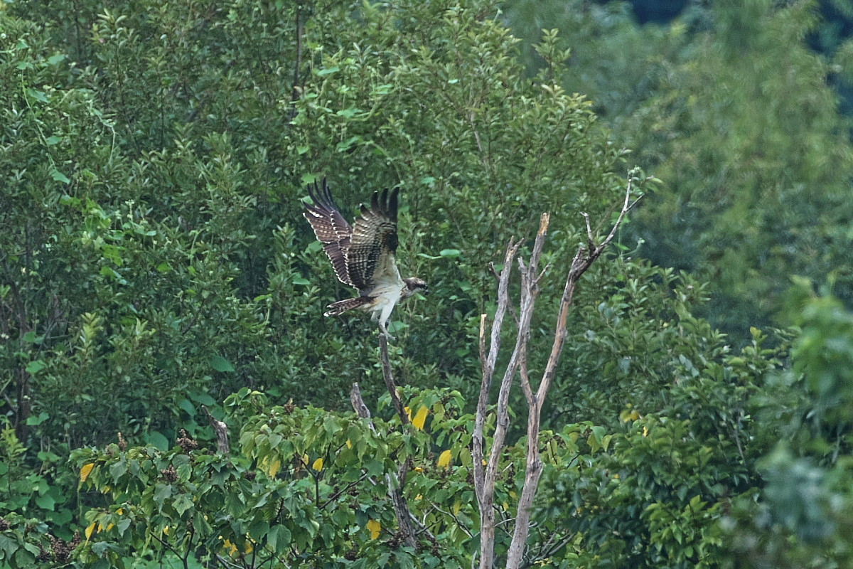 ミサゴの樹にて_d0125872_22172136.jpg