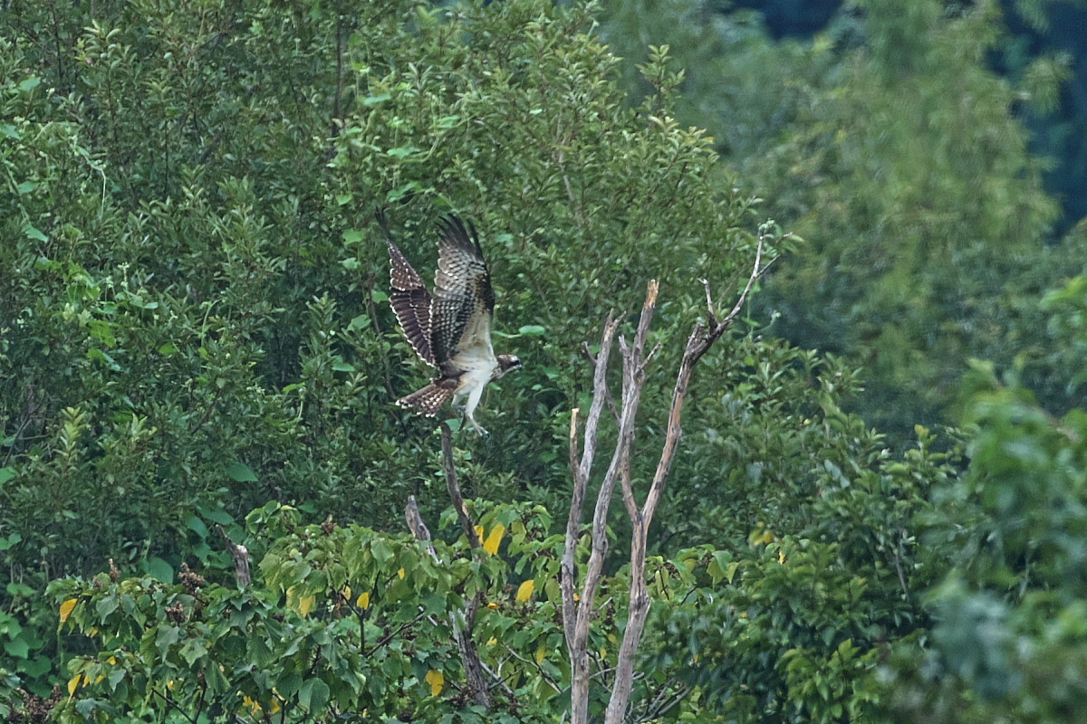 ミサゴの樹にて_d0125872_22172208.jpg