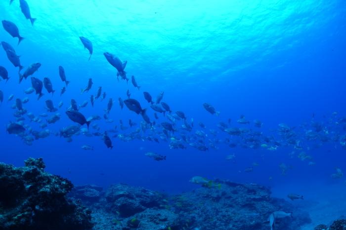 200922    島周りにて3DV!_a0335173_14105496.jpg
