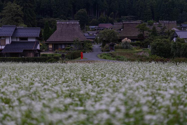 美山かやぶきの里_e0051888_05485479.jpg