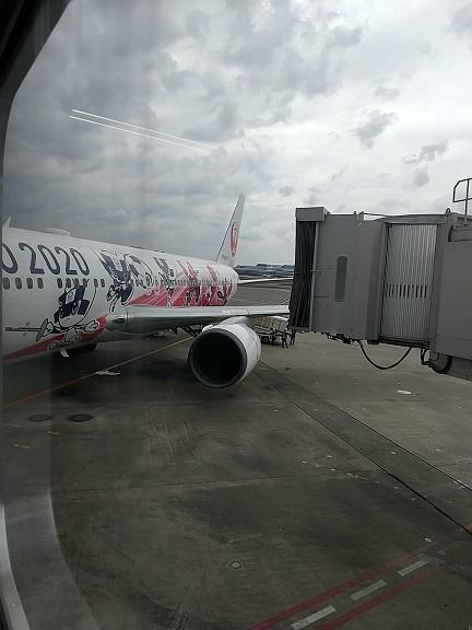 特別塗装機「みんなのJAL2020ジェット」2号機に乗った_d0043390_18043785.jpg
