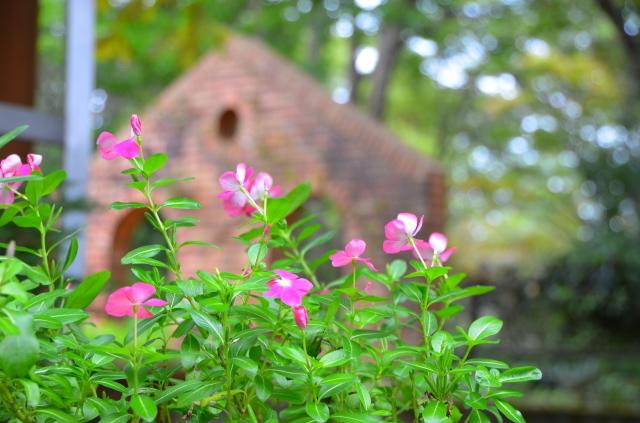 昭和記念公園(2)_a0223597_20350857.jpg