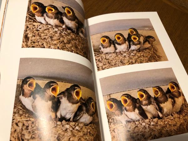 photo book・・・_e0372432_17560469.jpg