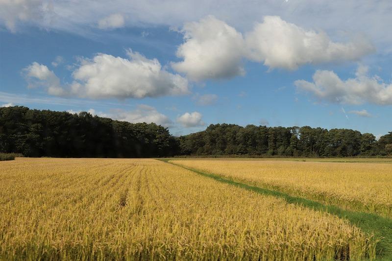 9月24日(木) 秋の始まりを感じながら ~大沼にて 1_b0250154_20092368.jpg