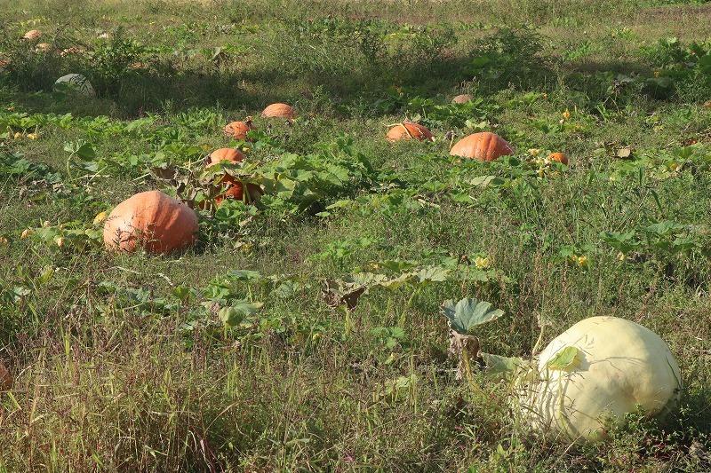 9月24日(木) 秋の始まりを感じながら ~大沼にて 1_b0250154_20095999.jpg