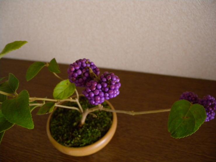 紫式部_f0378554_17345862.jpg