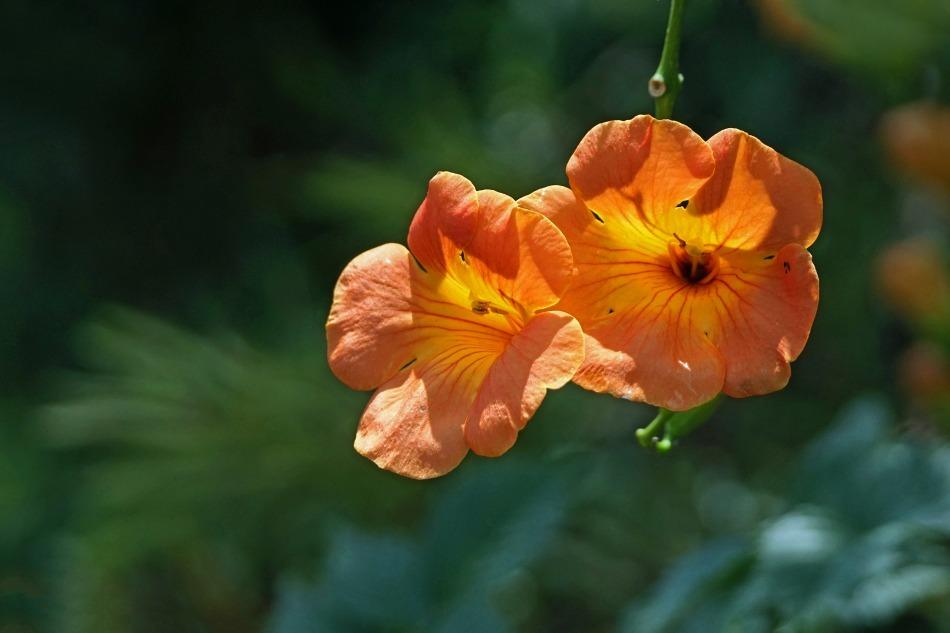 夏の花  2020-10-11_e0229455_12294996.jpg