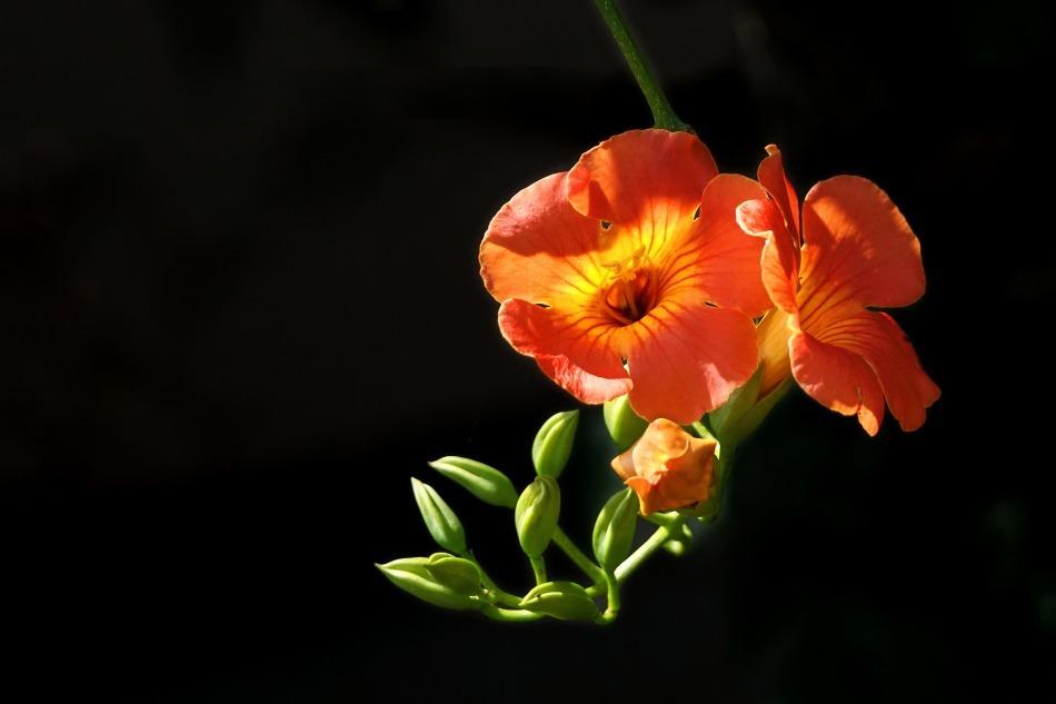 夏の花  2020-10-11_e0229455_12300929.jpg