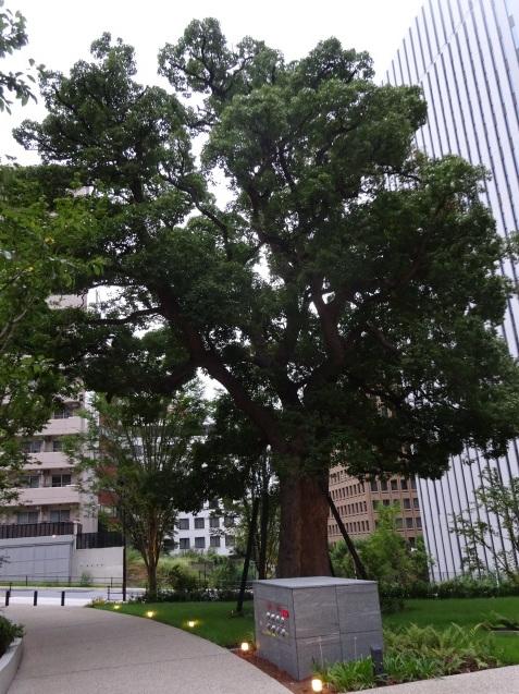 東京エディション虎ノ門 (1) チェックイン_b0405262_00325185.jpg