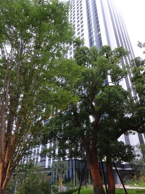 東京エディション虎ノ門 (1) チェックイン_b0405262_00331495.jpg