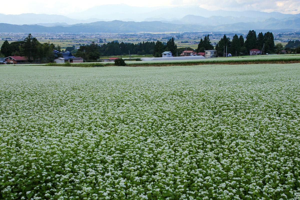蕎麦畑_e0088874_23401762.jpg