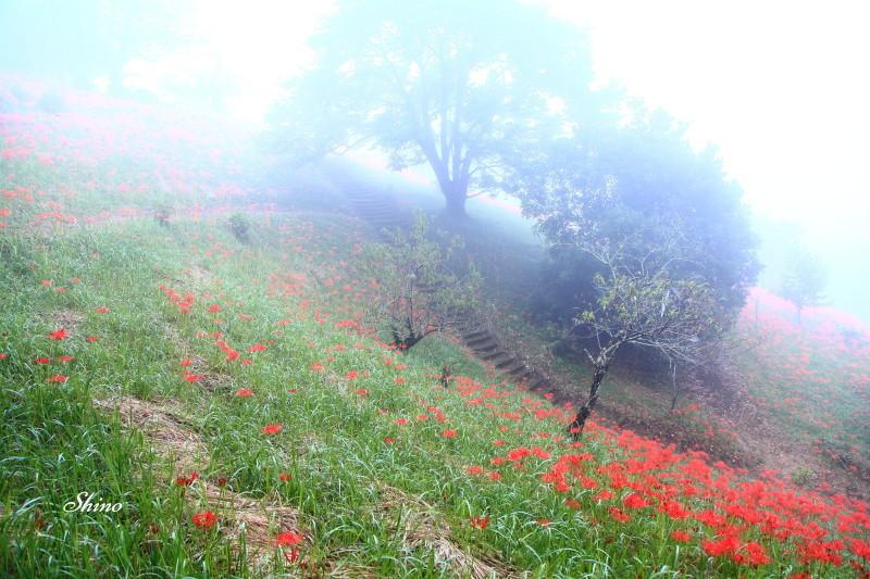 霧の朝_c0250376_12573508.jpg