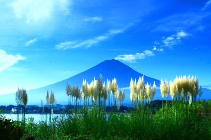 令和2年9月の富士(8) 河口湖のパンパスグラスと富士_e0344396_14484993.jpg