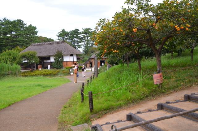 昭和記念公園(3)_a0223597_17451668.jpg