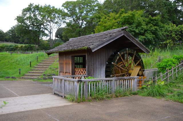 昭和記念公園(3)_a0223597_17452155.jpg