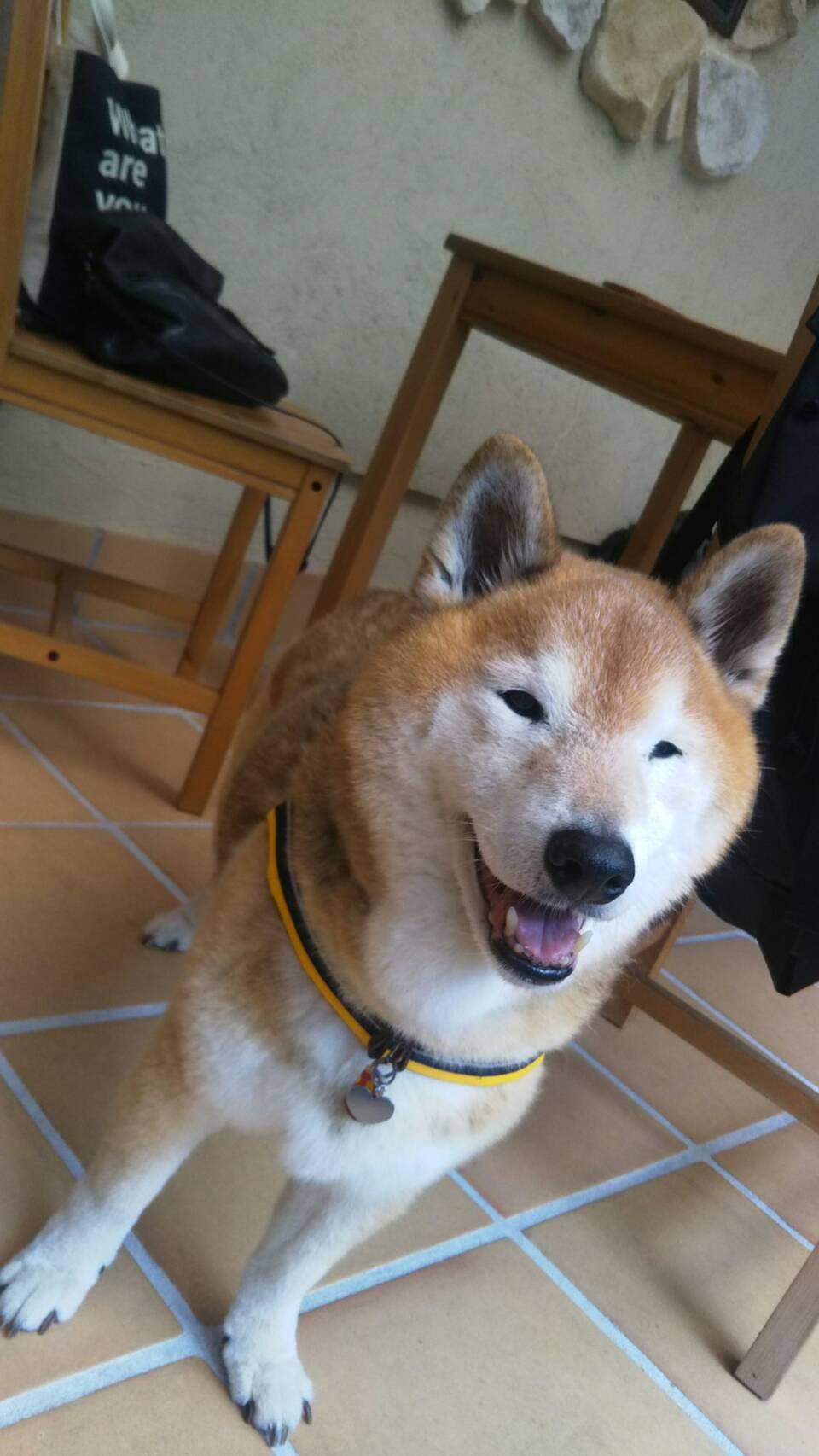 八ヶ岳2020(1) 気持ちが顔に出る柴犬_c0221299_20092644.jpg