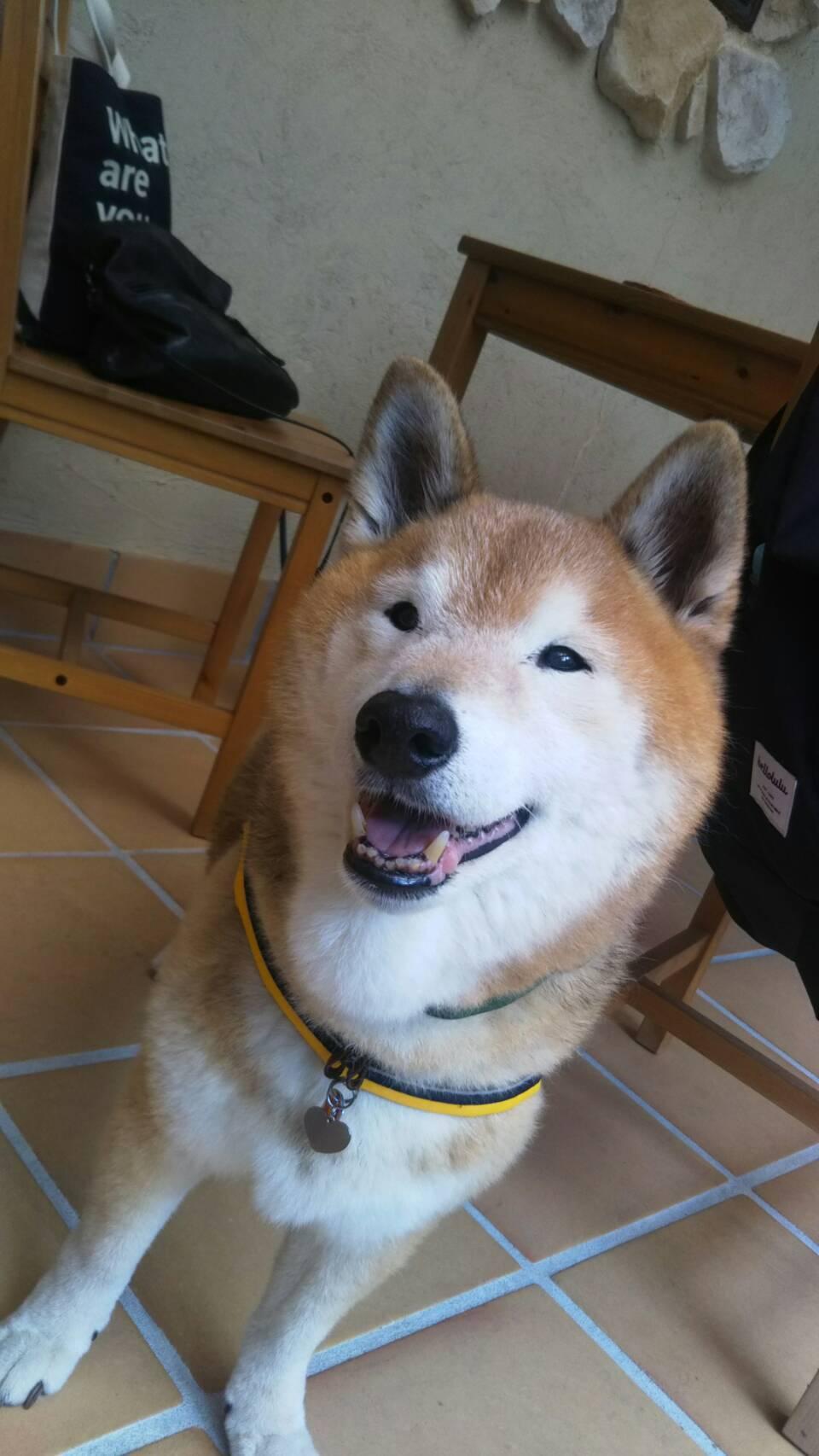 八ヶ岳2020(1) 気持ちが顔に出る柴犬_c0221299_20095887.jpg