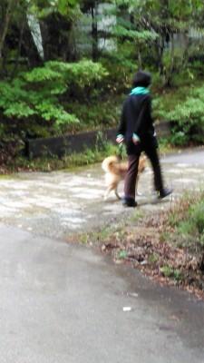 八ヶ岳2020(1) 気持ちが顔に出る柴犬_c0221299_20140881.jpg