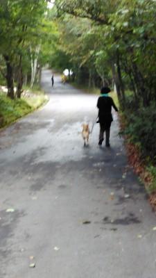 八ヶ岳2020(1) 気持ちが顔に出る柴犬_c0221299_20150538.jpg