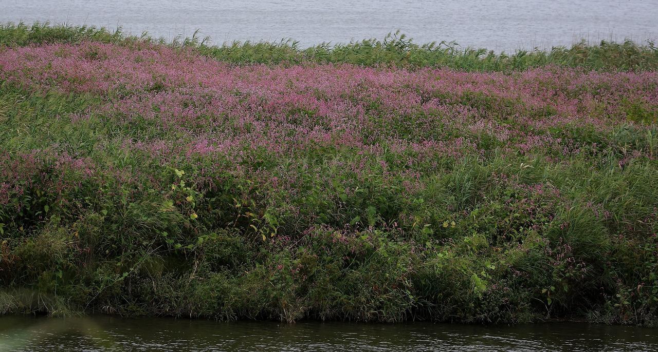 湿原にて_f0296999_15051795.jpg