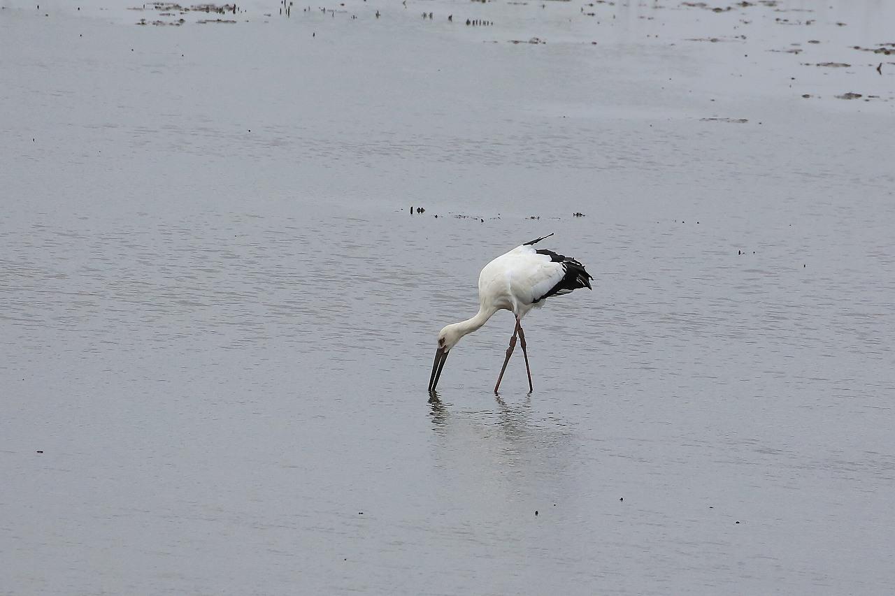湿原にて_f0296999_15055042.jpg