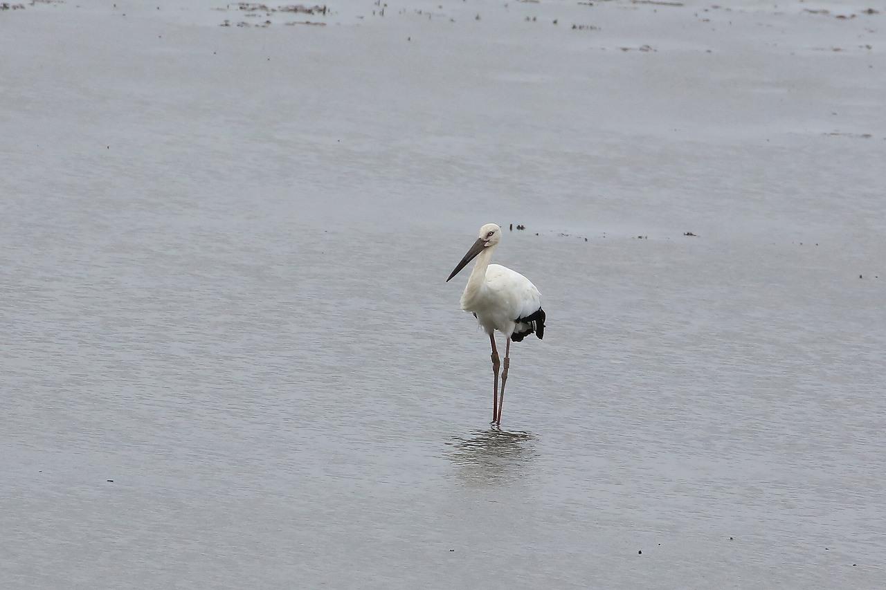 湿原にて_f0296999_15055684.jpg