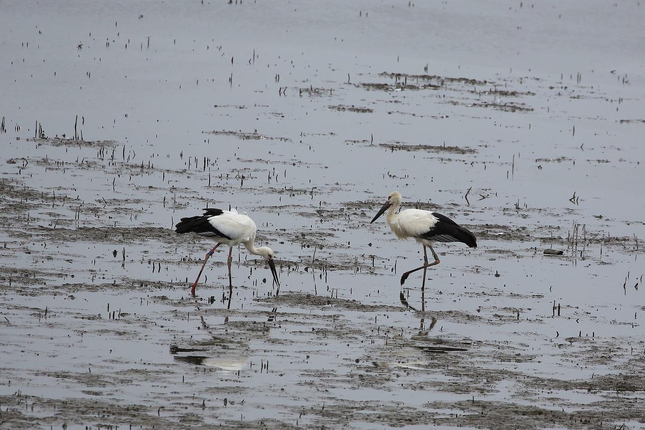湿原にて_f0296999_15061084.jpg
