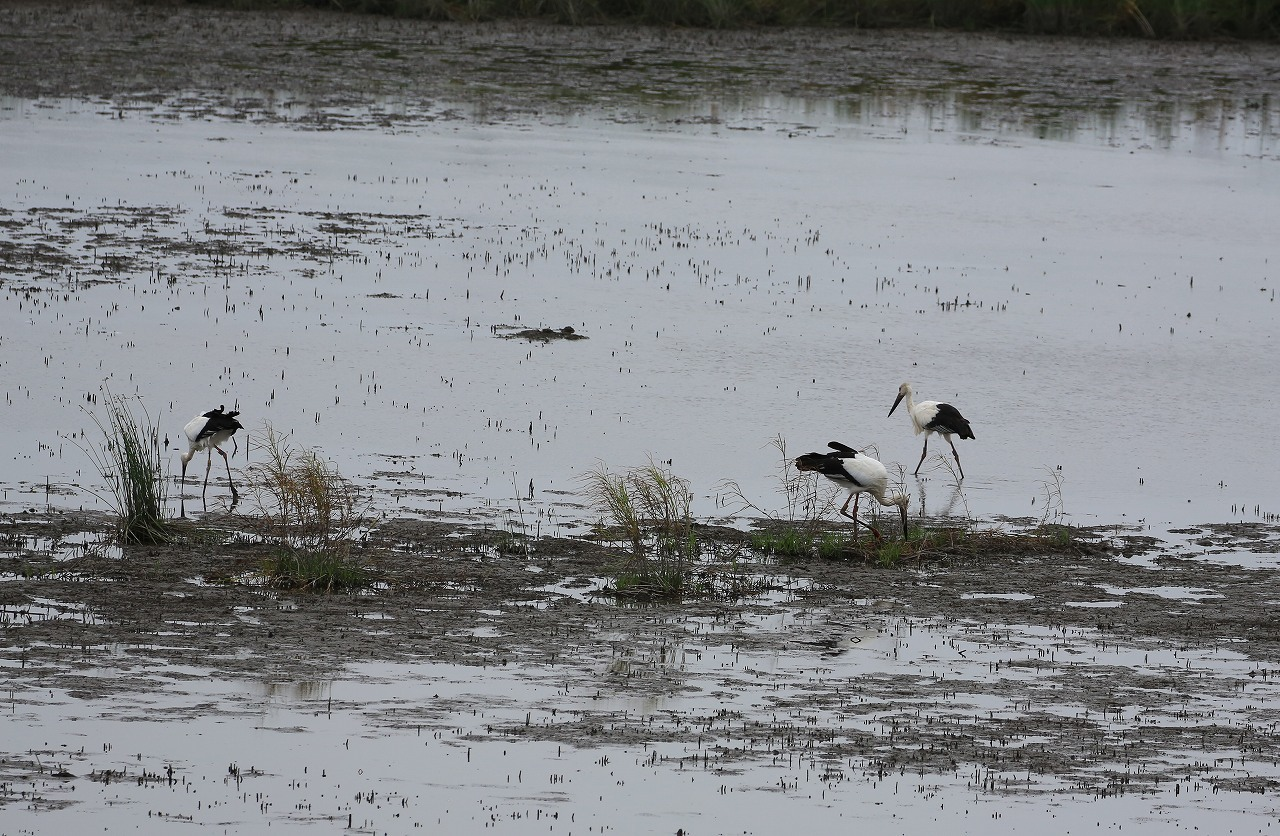 湿原にて_f0296999_15064624.jpg