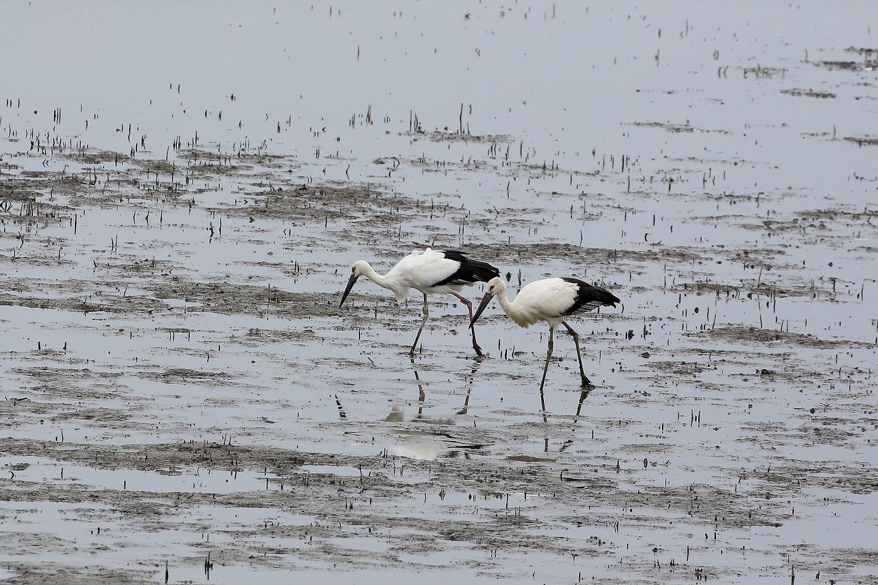湿原にて_f0296999_15070172.jpg