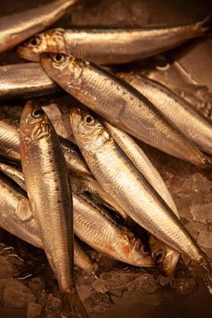 魚河岸テラス_c0367403_06043944.jpg