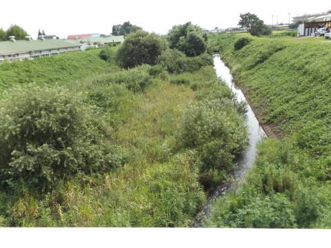 河川内雑木の整理進む!_b0092858_14194467.jpg