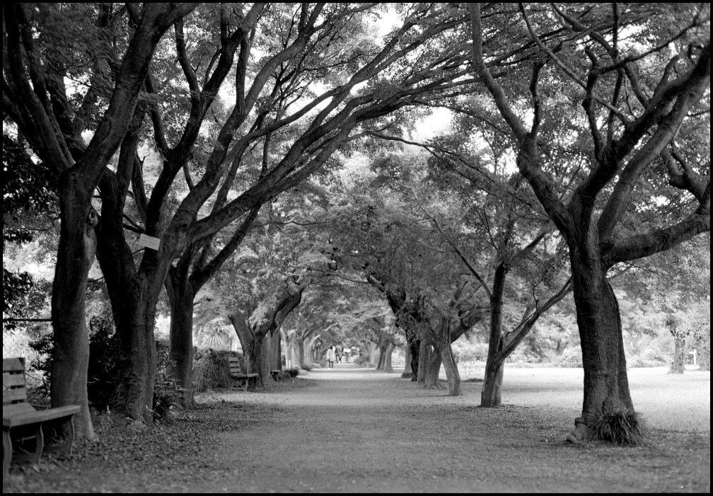小石川植物園 -15_b0340572_22001574.jpg