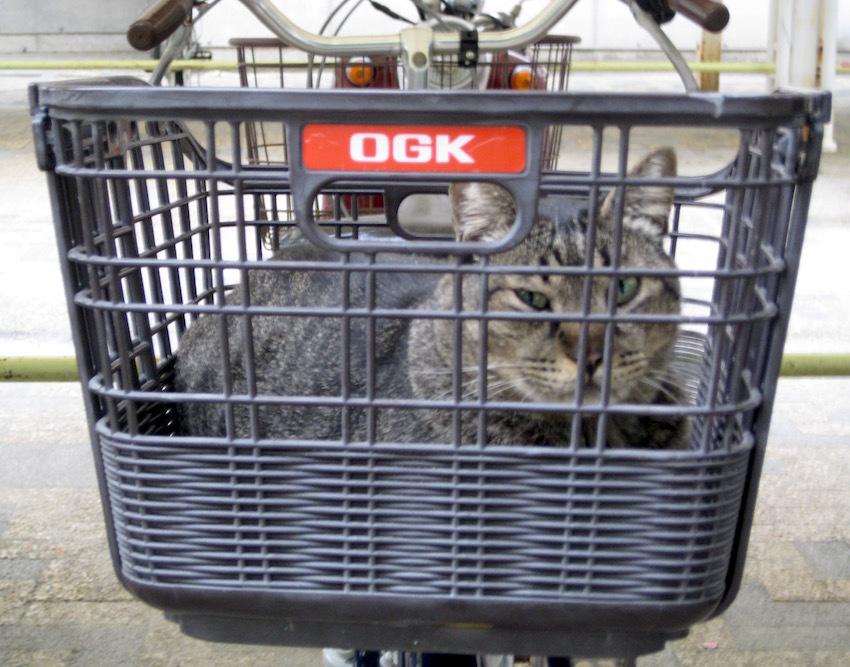 自転車猫_b0057679_08103985.jpg
