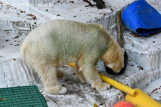 2020年8月 天王寺動物園 その3_a0052986_7423012.jpg