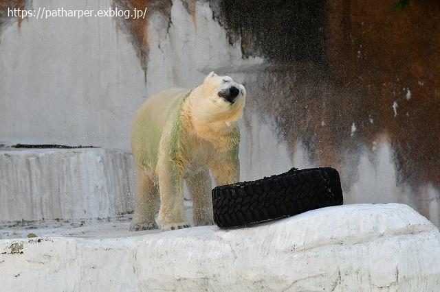 2020年8月 天王寺動物園 その3_a0052986_7483951.jpg