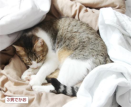 猫の寝相_a0389088_05031664.jpg