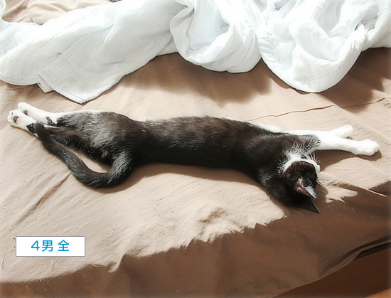 猫の寝相_a0389088_05031791.jpg