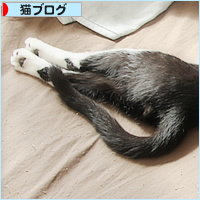 猫の寝相_a0389088_05031801.jpg