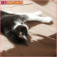 猫の寝相_a0389088_05031886.jpg