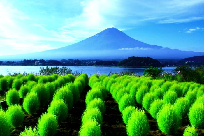 令和2年9月の富士(9) 大石公園のコキアと富士_e0344396_19024518.jpg
