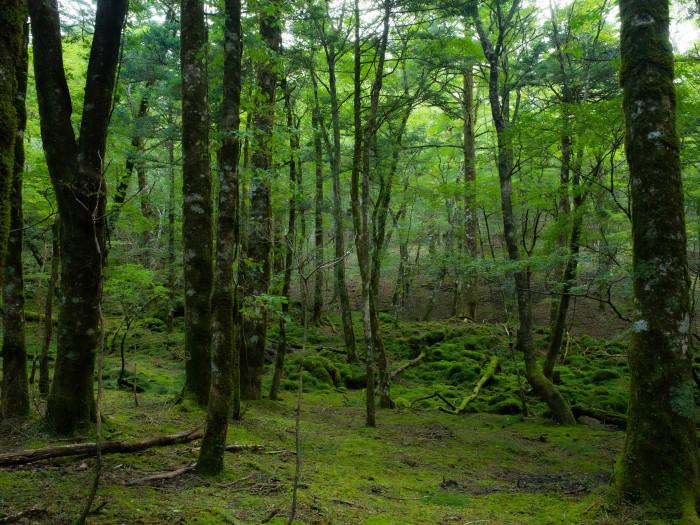 富士山の裾野の森_e0276411_12174567.jpg