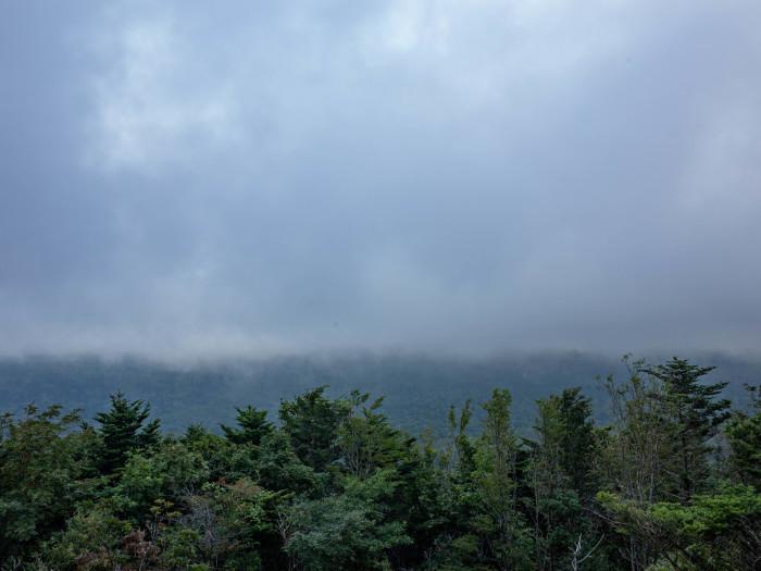 富士山の裾野の森_e0276411_12231609.jpg