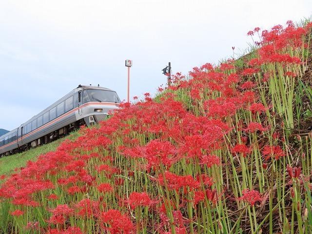 中川の彼岸花(撮影:9月20日)_e0321325_10571347.jpg