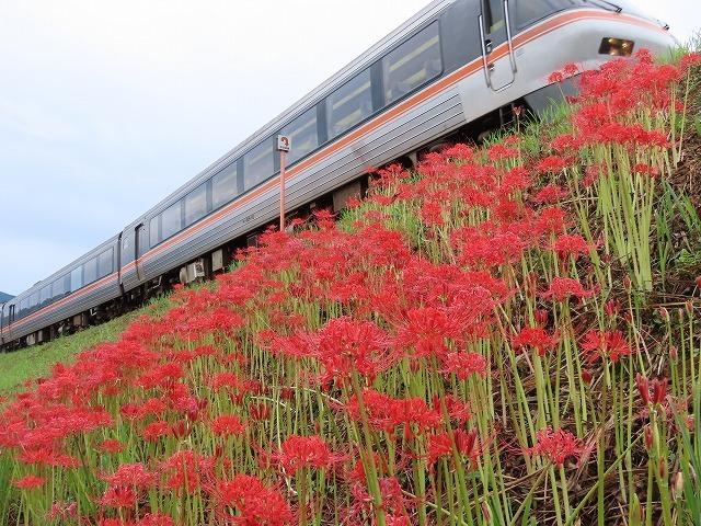 中川の彼岸花(撮影:9月20日)_e0321325_11000828.jpg
