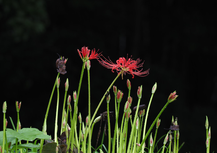 美しき湿原にミサゴがやって来た Ⅴ_d0290240_11105760.jpg