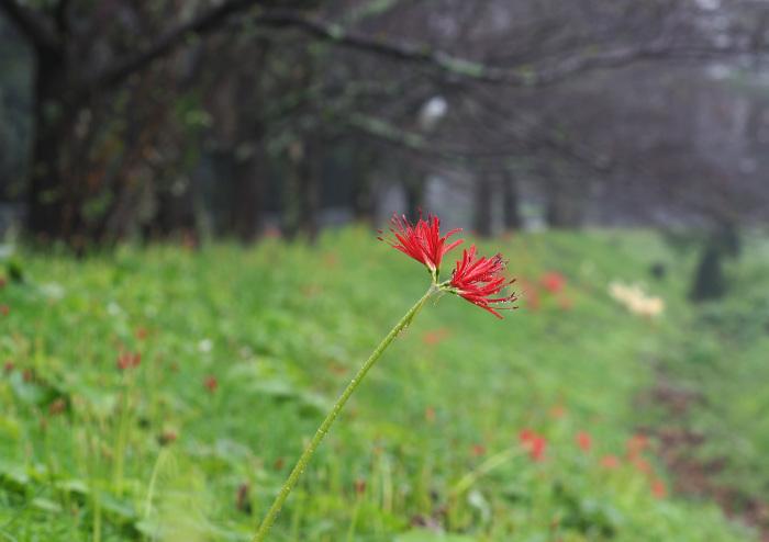 美しき湿原にミサゴがやって来た Ⅴ_d0290240_11105882.jpg